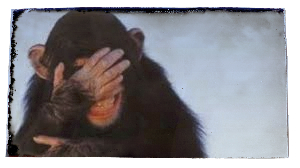 embarrased monkey